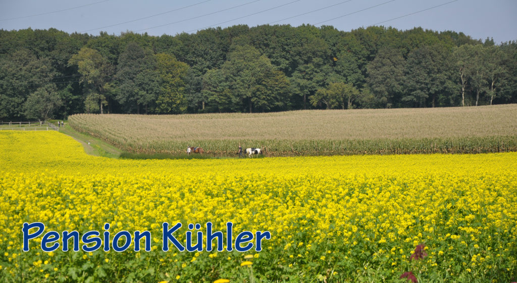 pension_kuehler